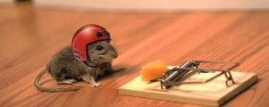 mouse_cheese_mouse_trap_helmet_funny_situation_52866_2560x1024